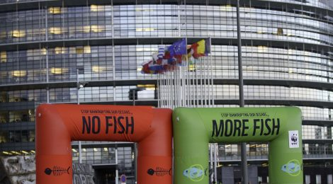 New Publication: Interest groups in EU Common Fisheries Policy